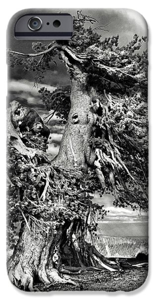 Survivor Art iPhone Cases - Lone gnarled old Bristlecone Pines at Crater Lake - Oregon iPhone Case by Christine Till