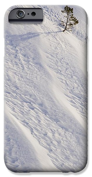 Lone Tree On Mount Hood In Winter Mount iPhone Case by Craig Tuttle