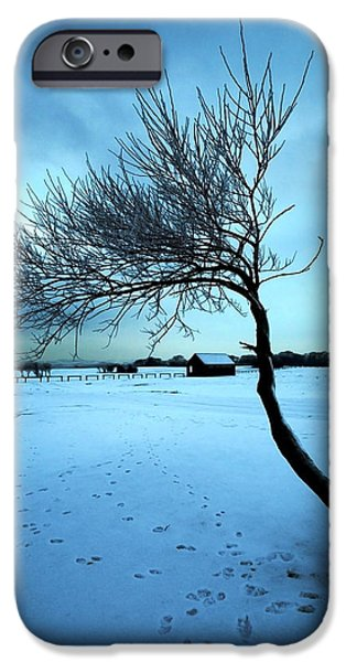 Seagull iPhone Cases - Lonely Winter Tree iPhone Case by Svetlana Sewell