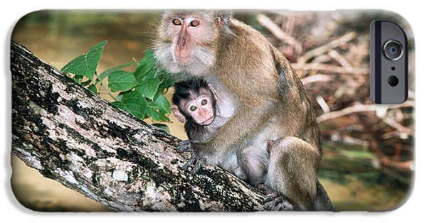 Parental Care iPhone Cases - Long-tailed Macaque Mother And Baby iPhone Case by Georgette Douwma