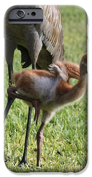 Baby Bird iPhone Cases - Look What I Can Do iPhone Case by Carol Groenen