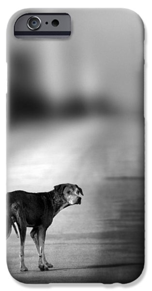 Black Dog iPhone Cases - Looking Back iPhone Case by Amanda And Christopher Elwell