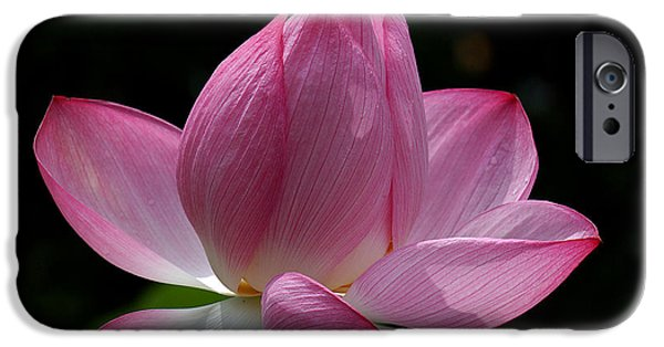 Nature Study iPhone Cases - Lotus Beauty--Beauty in Disarray DL027 iPhone Case by Gerry Gantt