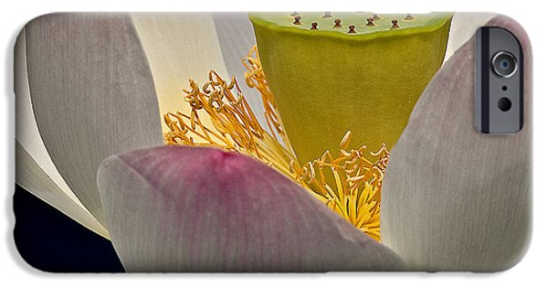 Botanical iPhone Cases - Lotus Blossom iPhone Case by Susan Candelario