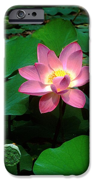 Lotus Flower and Capsule 24A iPhone Case by Gerry Gantt