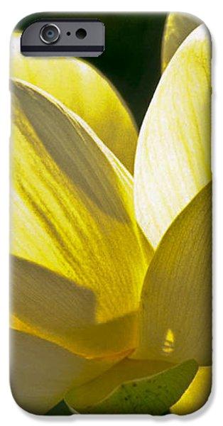 Lotus Flower iPhone Case by Heiko Koehrer-Wagner