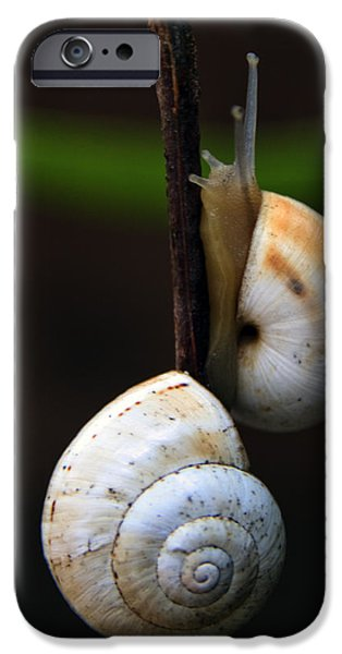 Helix iPhone Cases - Love Affair iPhone Case by Stylianos Kleanthous