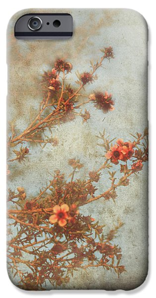 Love Is In Bloom iPhone Case by Laurie Search