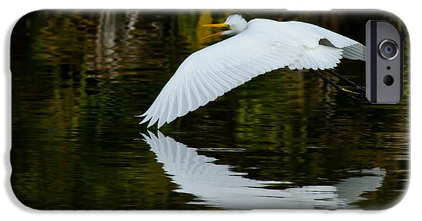 Birds iPhone Cases - Low Flying Reflection of Snowy Egret iPhone Case by Andres Leon