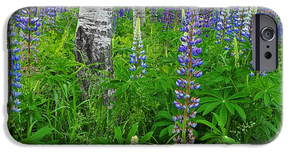 Nature Scene iPhone Cases - Luminous Lupines and Aspen Trunk iPhone Case by Thomas Schoeller