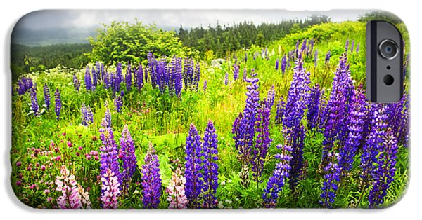 Field. Cloud iPhone Cases - Lupin flowers in Newfoundland iPhone Case by Elena Elisseeva