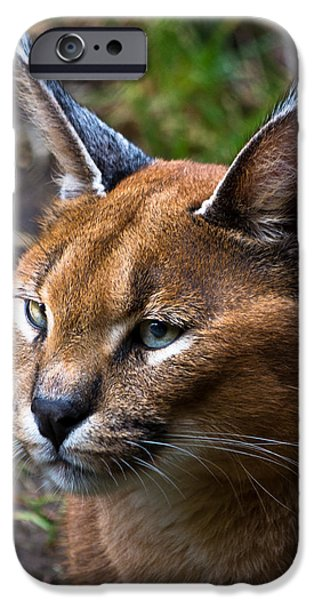 Preditor iPhone Cases - Lynx iPhone Case by James Begley
