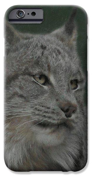 Lynx iPhone Cases - Lynx Painterly iPhone Case by Ernie Echols
