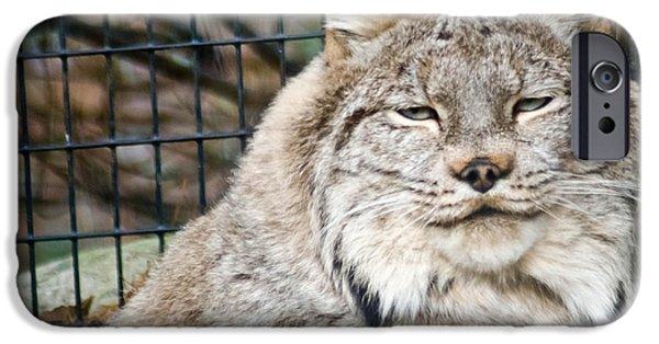 Lynx iPhone Cases - Lynx iPhone Case by Trish Tritz