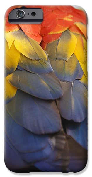 Nature Study iPhone Cases - Macaw Parrot Plumes iPhone Case by Adam Romanowicz