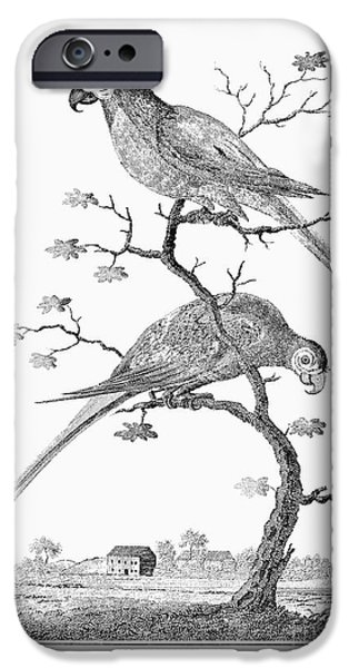 1796 iPhone Cases - Macaws, 1796 iPhone Case by Granger