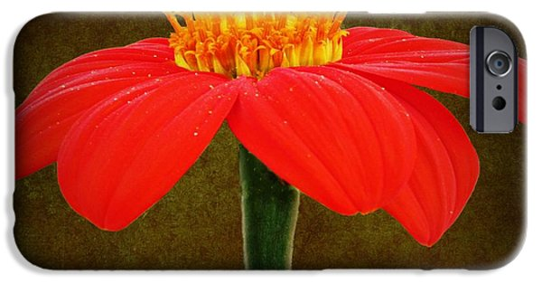David iPhone Cases - Magenta Zinnia Flower iPhone Case by David Dehner