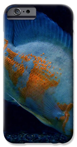 Magic Fish Name Oscar  iPhone Case by Colette V Hera  Guggenheim