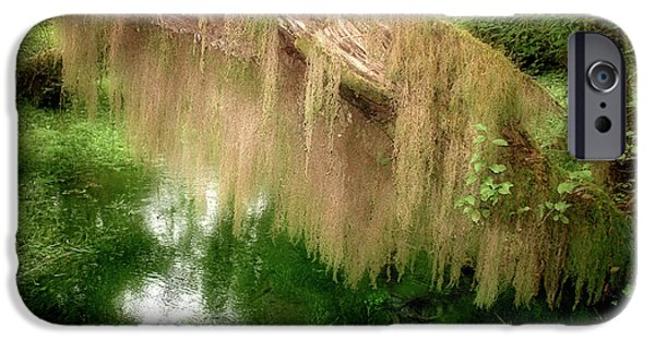 Tendrils iPhone Cases - Magical Hall of Mosses - Hoh Rain Forest Olympic National Park WA USA iPhone Case by Christine Till