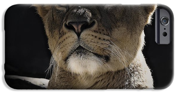 Cat iPhone Cases - Magnificent lioness iPhone Case by Sheila Smart