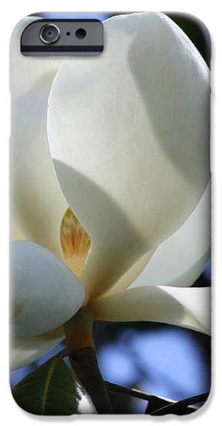Magnolia in Blue iPhone Case by Carol Groenen