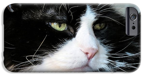 Witch Halloween Cat Wicca iPhone Cases - Maine Coon Face iPhone Case by Michelle Milano