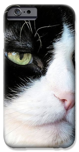 Maine Coon Face iPhone Case by Michelle Milano