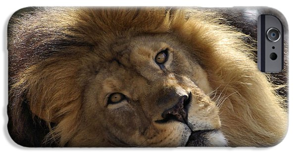 Lion iPhone Cases - Majestic Love iPhone Case by Linda Mishler