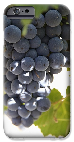 Malbec iPhone Cases - Malbec Grapes On The Vine iPhone Case by Peter Langer