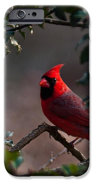 Male Cardinal iPhone Case by Ron Smith