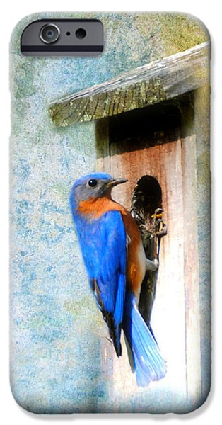 Male Eastern Bluebird At Nesting Box iPhone Case by Jai Johnson