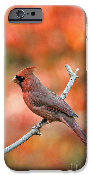 Male Northern Cardinal - D007810 iPhone Case by Daniel Dempster