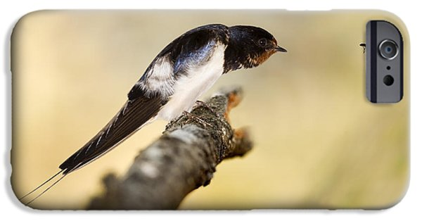 Hirundo iPhone Cases - Male Swallow iPhone Case by Power And Syred