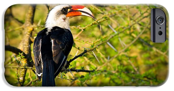 Aviary iPhone Cases - Male Von Der Deckens Hornbill iPhone Case by Adam Romanowicz