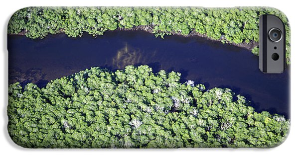 Mangrove Forest iPhone Cases - Mangrove River iPhone Case by Alexis Rosenfeld