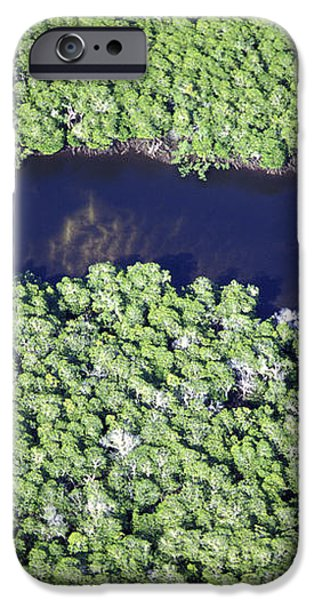 Mangrove River iPhone Case by Alexis Rosenfeld