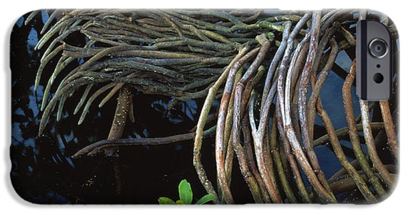 Rhizophora Mangle iPhone Cases - Mangrove Roots iPhone Case by G. Brad Lewis