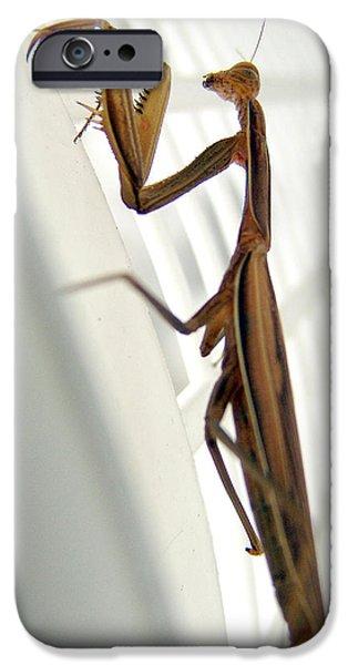 Mantises iPhone Cases - Mantis iPhone Case by Alessandro Della Pietra