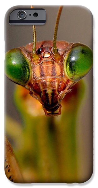 Mantises iPhone Cases - Mantis Eyes iPhone Case by William Jobes