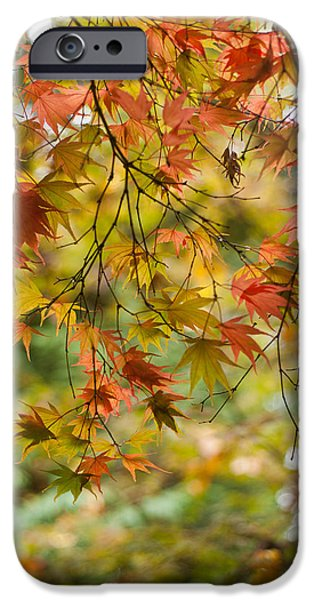 Berry iPhone Cases - Maple Collage iPhone Case by Mike Reid