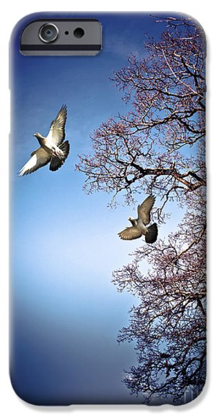 Animals Photographs iPhone Cases - March Evening iPhone Case by Jan Bickerton