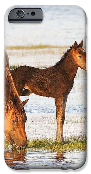 Mare and Foal iPhone Case by Bob Decker