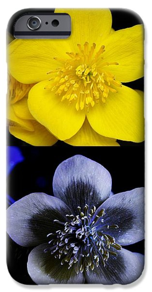 Marsh Marigold In Uv Light iPhone Case by Cordelia Molloy
