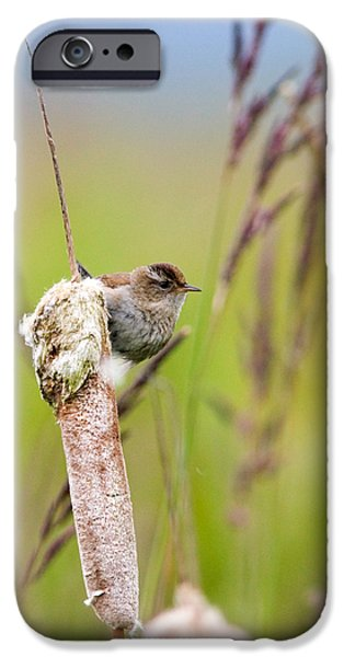 Wren iPhone Cases - Marsh Wren iPhone Case by Randall Ingalls