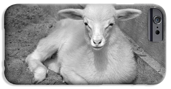 Barnyard Animals iPhone Cases - Marys Little Lamb... or Kid in Black and White iPhone Case by Suzanne Gaff