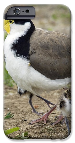 Lapwing iPhone Cases - Masked Lapwing And Chick iPhone Case by Tony Camacho