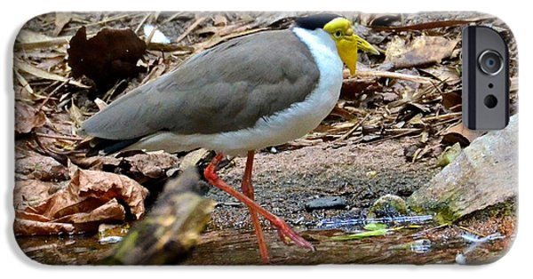 Lapwing iPhone Cases - Masked Lapwing iPhone Case by Carol  Bradley