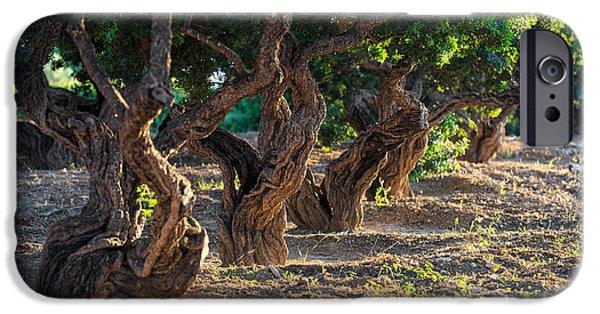 Mesta iPhone Cases - Mastic tree   iPhone Case by Emmanuel Panagiotakis