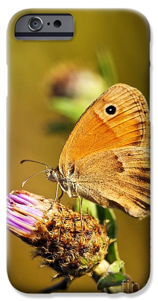 Feeding iPhone Cases - Meadow brown butterfly  iPhone Case by Elena Elisseeva