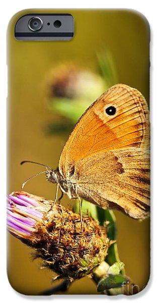 Meadow brown butterfly  iPhone Case by Elena Elisseeva